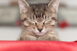 Ile żyją koty, psy i inne domowe pupile