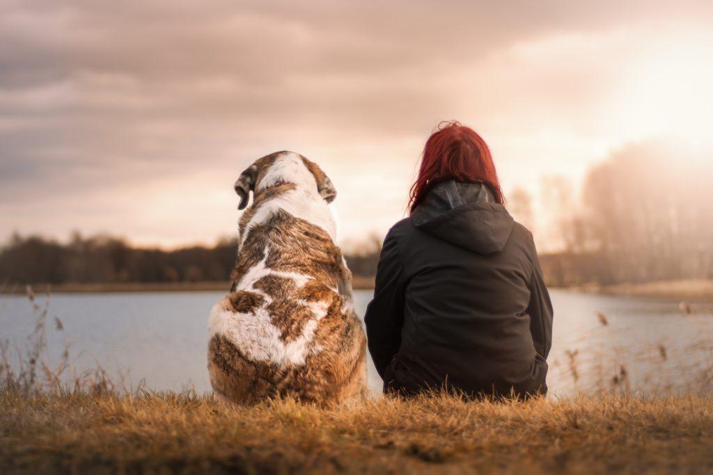czipowanie psa - przyjaciel człowieka