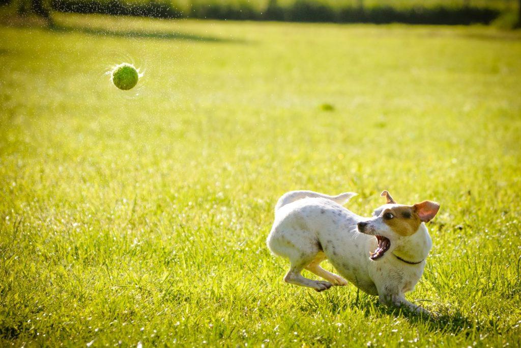 Zabawki dla psa – bezpieczne i pożyteczne
